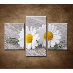 Obrazy na stenu - Kamilky - 3dielny 90x60cm