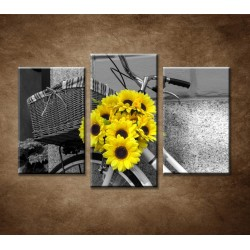 Obrazy na stenu - Slnečnice na bicykli - 3dielny 90x60cm