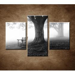 Obrazy na stenu - Park v hmle  - 3dielny 90x60cm