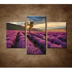 Obrazy na stenu - Východ slnka nad levanduľou - 3dielny 90x60cm