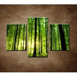 Obrazy na stenu - Zelený les - 3dielny 90x60cm