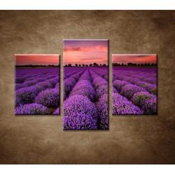 Obrazy na stenu - Krajina s levanduľou - 3dielny 90x60cm