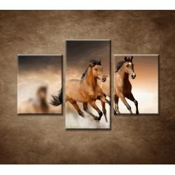 Obrazy na stenu - Hnedé kone - 3dielny 90x60cm
