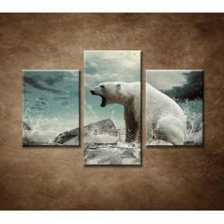 Obrazy na stenu - Polárny medveď - 3dielny 90x60cm