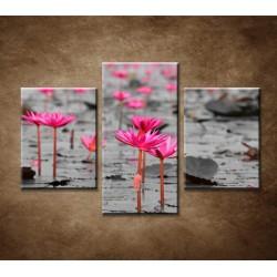 Obrazy na stenu - Lotosové pole - 3dielny 90x60cm