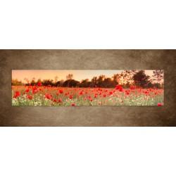 Červené makové pole