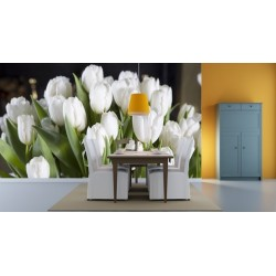 Biele tulipány