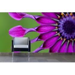 Fototapeta - Tropický kvet