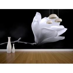 Fototapeta - Kvet magnólie