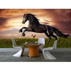 Fototapeta - Čierny kôň