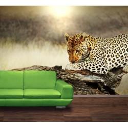 Fototapety - Odpočívajúci leopard