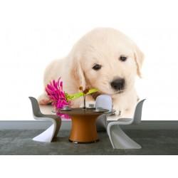 Fototapety - Psík s kvetom
