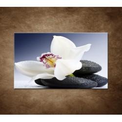 Biela orchidea na čiernom kameni