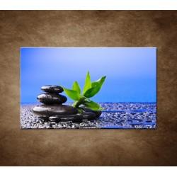 Bambusový výhonok na kameni
