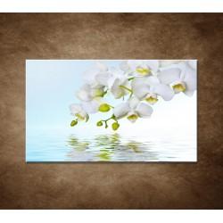 Biela orchidea nad hladinou