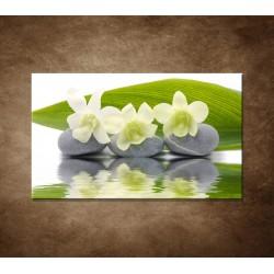 Obraz na stenu - Biele kvety na kameňoch