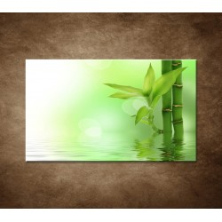 Bambusový výhonok