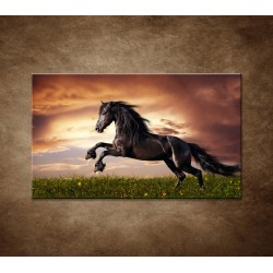 Obrazy na stenu - Čierny kôň