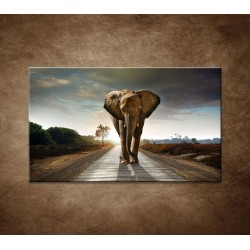 Obrazy na stenu - Slon