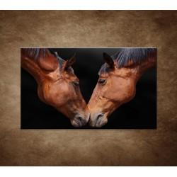 Obrazy na stenu - Kone