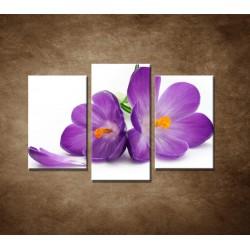 Obrazy na stenu - Krokus - 3dielny 75x50cm
