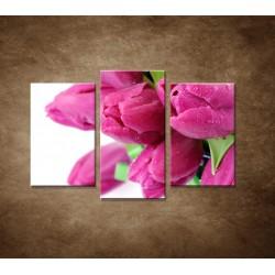 Obrazy na stenu - Tulipány - 3dielny 75x50cm
