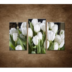 Biele tulipány - 3dielny 75x50cm