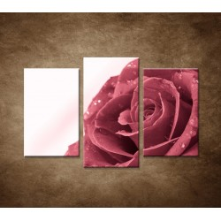 Ruža s rosou - zátišie - 3dielny 75x50cm