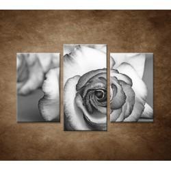 Ruža - 3dielny 75x50cm