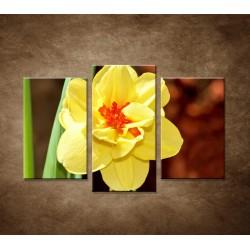 Narcis - detail - 3dielny 75x50cm