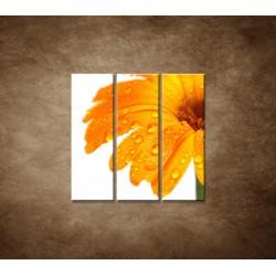 Obrazy na stenu - Oranžová gerbera - 3dielny 90x90cm