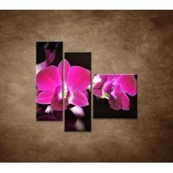 Obrazy na stenu - Ružová orchidea na čiernom pozadí - 3dielny 110x90cm