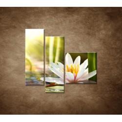 Obrazy na stenu - Lekno - 3dielny 110x90cm