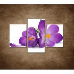 Obrazy na stenu - Krokus - 3dielny 90x60cm