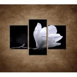 Obrazy na stenu - Kvet magnólie - 3dielny 90x60cm