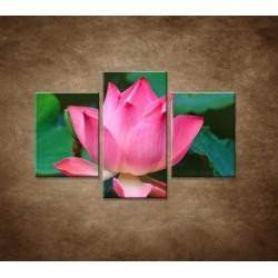 Obrazy na stenu - Lekno 2  - 3dielny 90x60cm