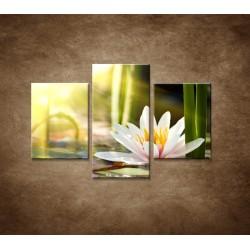 Obrazy na stenu - Lekno - 3dielny 90x60cm