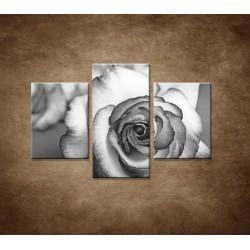 Obrazy na stenu - Ruža - 3dielny 90x60cm