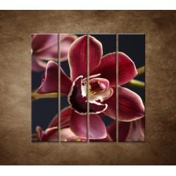 Bordová orchidea - 4dielny 120x120cm