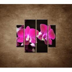 Obrazy na stenu - Ružová orchidea na čiernom pozadí - 4dielny 100x90cm